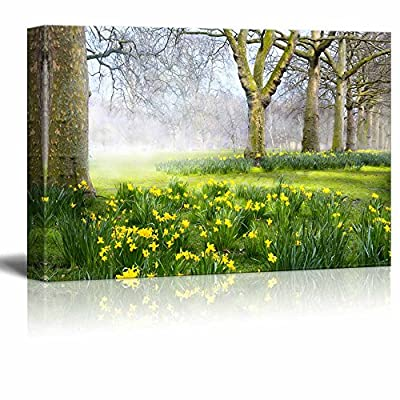 Canvas Prints Wall Art - Beautiful Trees and Green Grass in a Park in The Summer Morning | Modern Wall Decor/Home Art Stretched Gallery Canvas Wraps Giclee Print & Ready to Hang - 12