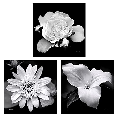 Botanical wall art flower photo prints set of 3 black and white floral photography