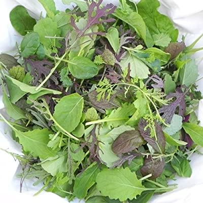Seeds and Things Spicy Salad Complement Lettuce Mix 400 + Seeds