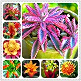 Shopvise 200 Pcs Cactus Bromeliad Rare Colorful Flower Plant Courtyard Mini Plant Succulent DIY Home Garden: Mixed