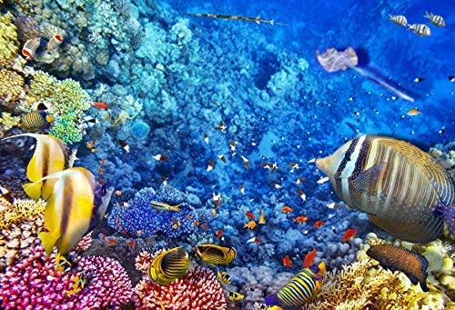 6x4ft Blue Ocean Aquarium Backgrouds for Photography Underwater World Coral Reef Tropical Fishes Baby Marine Birthday Banner Baby Shower Summer Party Photobooth Fish Tank Backgroud