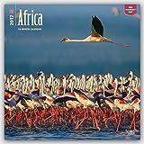 Africa 2017 Square