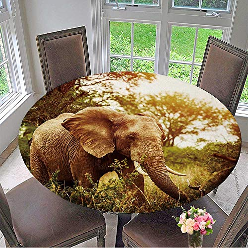 Mikihome The Round Table Cloth Huge Elephant Outdoors,Big Five,Game Drive,African Nature,Beautiful Wild Animal for Birthday Party, Graduation Party 47.5''-50'' Round (Elastic Edge) by Mikihome