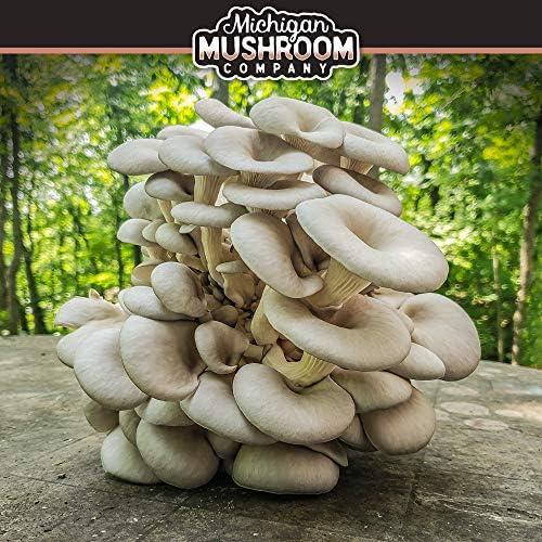 Detroit Mushroom Company Grow Your Own - Kit de Setas para Hongos ...