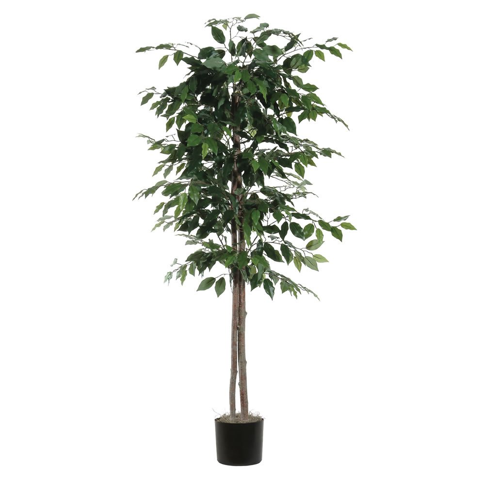Vickerman TEC0160-07 Everyday Ficus Tree, Green Dark, 6'