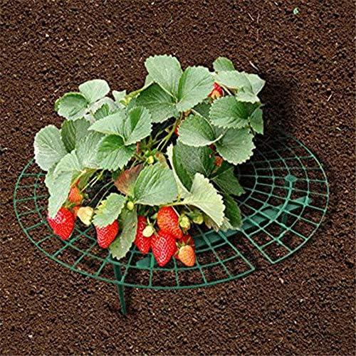 Wankd Erdbeeren-Reifer, 5 Stück Strawberry Plant Support Squash Cradle Plant Unterstützt den Schutz von Erdbeeren und hält die Erdbeerreinigung aufrecht (30 * 30CM)