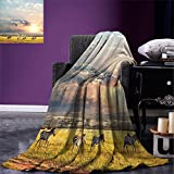 smallbeefly Safari Decor Throw Blanket Zebras Africa Exotic Wildland Natural Distant Forest Morning View Scenic Picture Print Warm Microfiber All Season Blanket for Bed or Couch