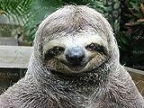 8'' Round Cake - Smiling Sloth Animal Birthday - Edible Cake or Cupcake Topper - D20119