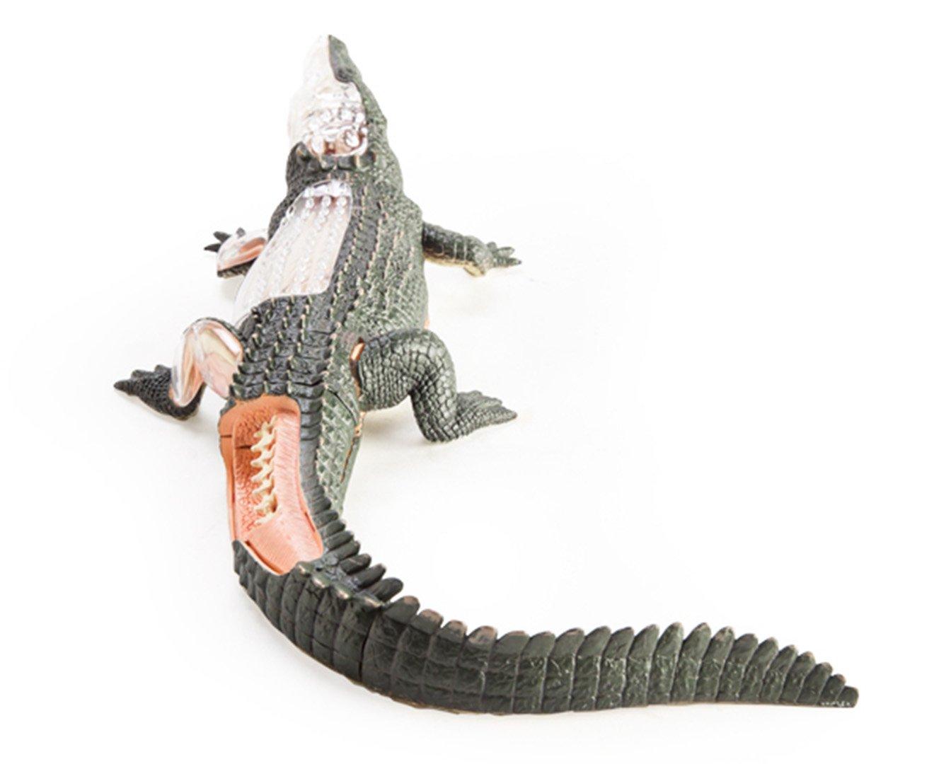 Amazon.com: 4D Anatomy Crocodile: Toys & Games