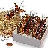 Orange Monarch Butterflies, 1-1/2'