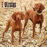 Vizslas 2018 12 x 12 Inch Monthly Square Wall Calendar, Animals Dog Breeds