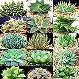 50 Seeds Aloe Vera Mix Air Purification Plant's