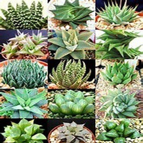 Grow Light Garden Propagator - 5