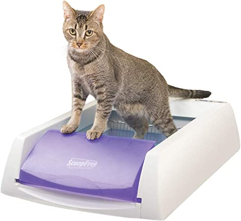 Amazon Com Petsafe Pal00 14242 Scoopfree Original Self Cleaning Cat Litter Box Automatic With Disposable Tray And Non Clumping Crystal Litter Purple Pet Supplies