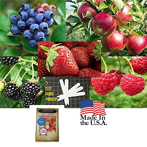 Fruit Combo Pack Raspberry, Blackberry, Blueberry, Strawberry, Apple (Organic) 975+ Seeds UPC 600188190656 & 5 Plant Markers (+Free Carnations) - Organic Tree Seeds