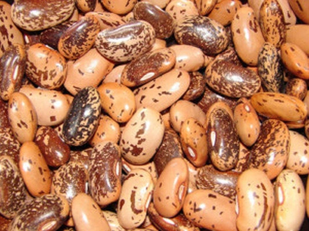 Pinto Soup Beans  Fresh Seed  FREE Shipping Soup Bean Seed