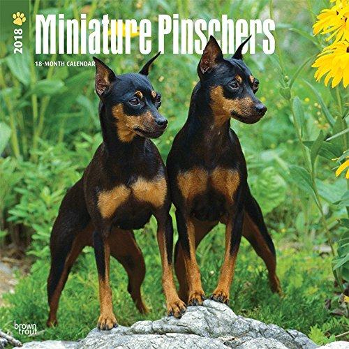 Pinscher Miniature (Miniature Pinschers 2018 Wall Calendar)