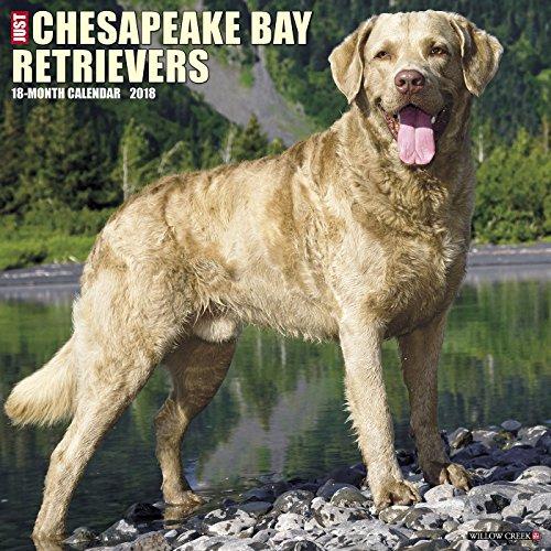Just Chesapeake Bay Retrievers 2018 Wall Calendar (Dog Breed Calendar)