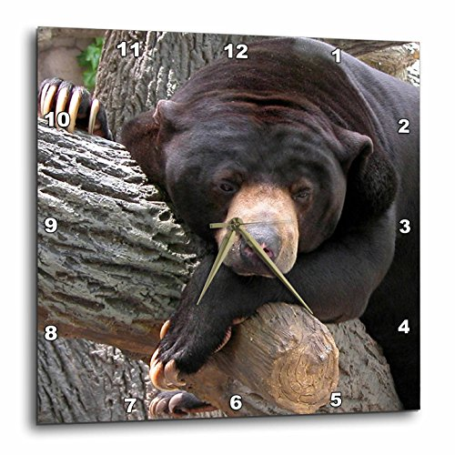 3dRose Beverly Turner Photography Oh Man What a Day Black Bear Wall Clock, 10 by 10-Inch -