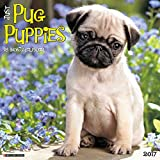 Just Pug Puppies 2017 Wall Calendar (Dog Breed Calendars)