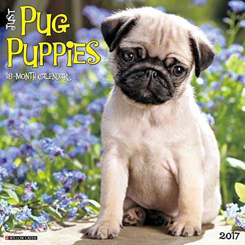 - Just Pug Puppies 2017 Wall Calendar (Dog Breed Calendars)