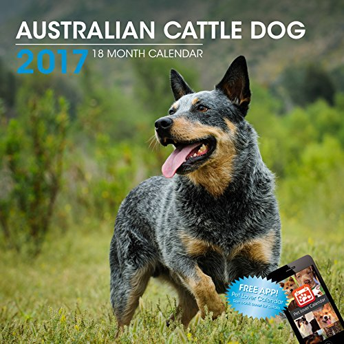 LittleGifts Australian Cattle Dog 2017 Calendar (3046)