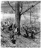 Photo: Treed,raccoon hunting,pack,dogs,animals,up tree,man,c1930