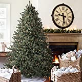 Balsam Hill™ Blue Spruce Artificial Christmas Tree, 6.5 Feet, Clear