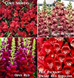Bulk 3 Snapdragon Seeds Survival Seeds 600 Seeds Upc 646263360538