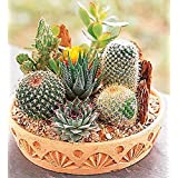 Cactus Seeds Mix Organic Ornamental Seed
