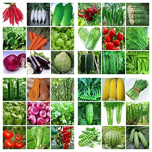 set-of-seeds-for-the-home-garden-natural-store-