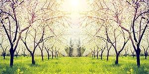 6x3ft Spring Apple Tree Blossom Background Sunlight Agriculture Farm Fruit Floral Garden Flower Wonderland Landscape Lawn Green Grow Grass Backdrop Vinyl Poster Banner Photo Studio Props