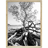 """MCS Art Shadow Box Series, Solid Wood Picture Frame, With 13/16"""" Width And 1 3/4 Depth Molding, For a 24x30"""" Photograph, Color: Natural."""