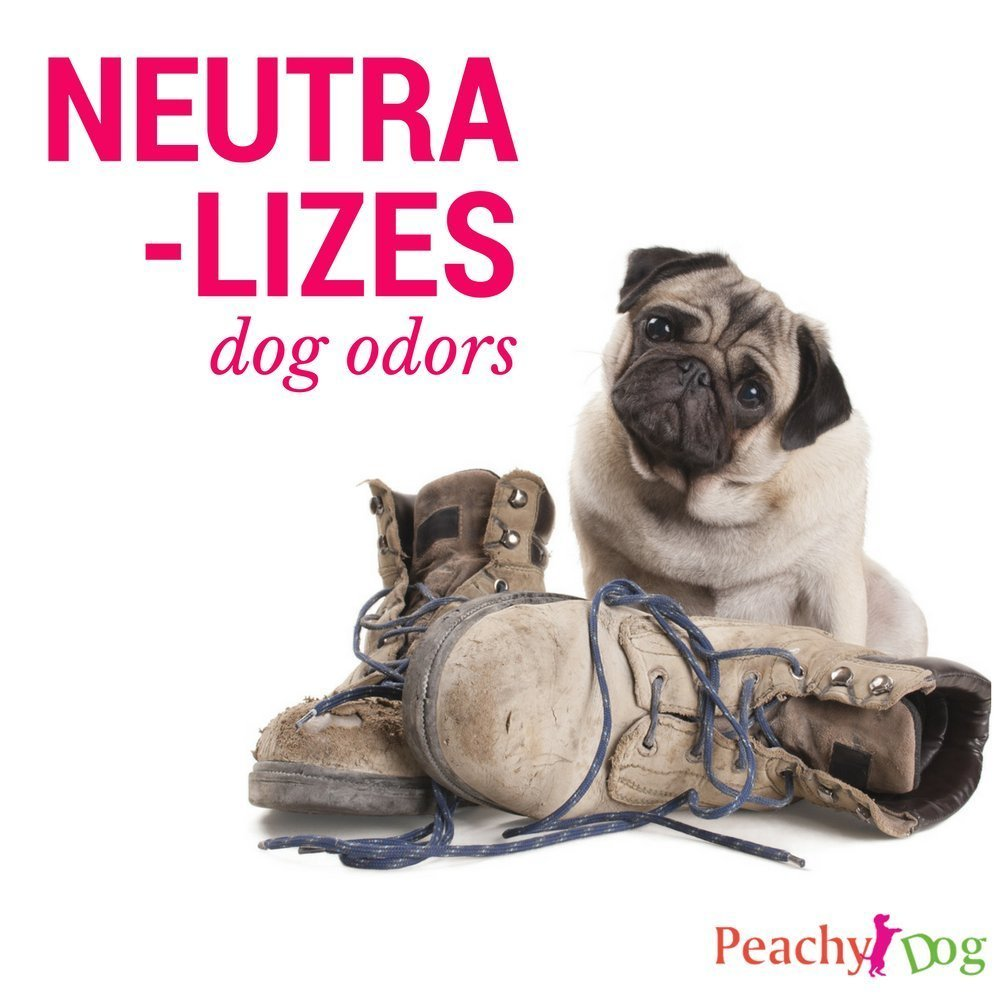 dogwash Natural Pet de harina de avena Champú eficazmente Alivia Irritación, hidrata y reparaciones de cura piel, pelo dañado, neutraliza los olores y ...