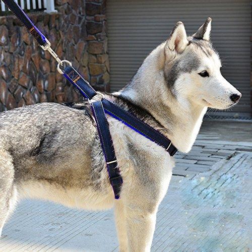Aodoor Softgeschirr mit Leine Brustgeschirr Hunde Geschirr Sicherheitsgeschirr Denim Leine für Haustiere Hunde verstellbare(L Blau)