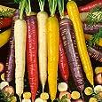 Carrot 100 Seeds Heirloom Colour Mix Vegetable Garden Purple Red Yellow Orange