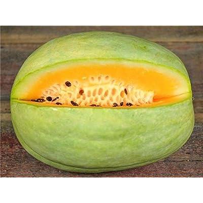Desert King Watermelon Seeds (25 Seeds) : Garden & Outdoor
