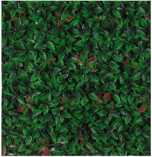 photinia Luxe de setos, widerstandsfähige hojas, gezackter borde, 98 x 98 cm: Amazon.es: Jardín