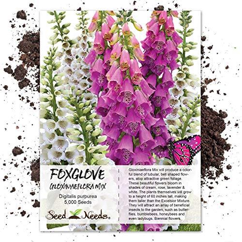 Seed Needs, Gloxiniaeflora Foxglove (Digitalis purpurea) 5,000 Seeds
