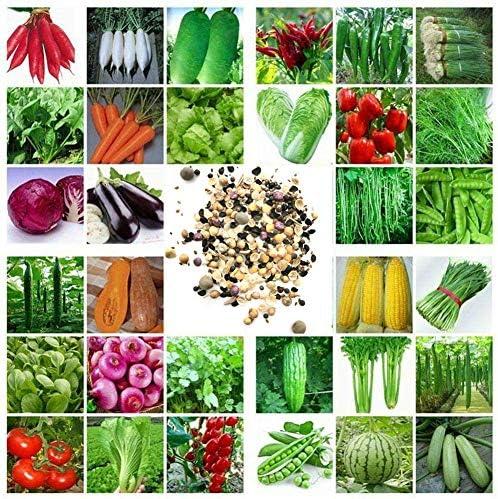 Sytaun 100 Stück Gemischte Gemüsesamen Köstlicher Nahrhafter Garten Garten Einfach Wachsen Pflanze Einfach Zu Pflanzen, Zierpflanze Gemischte Gemüsesamen