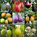 Loss Promotion! 100pcs (11Kinds) Mixed Pear Tree Seeds fruit seeds - Arcis New