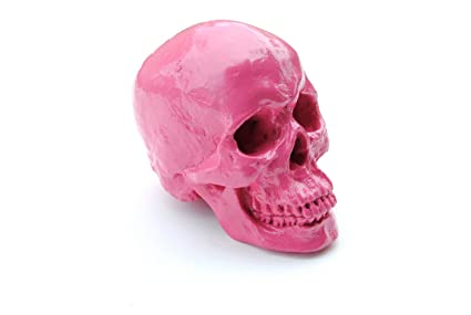 Amazon.com: Near & Deer Large - Life Size Human Anatomy - Faux Pink ...