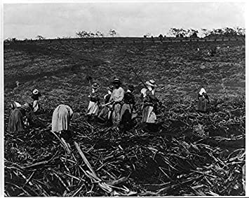 Amazon.com: Foto: Natives corte y con caña de azúcar, Cuba ...