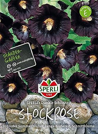 Sperli Stockrosen Sperli´s Dunkle Schönheit | mehrjährig | schnellwachsend | Päckchen Saatgut