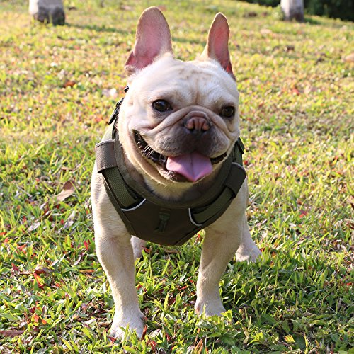 Dog Harness Medium No Pull Reflective Harness for Medium Dogs, Chest Leash Harness with Front Clip, Vehicle Harness for Safe, Two Leash Attachments Dog Walking Harness for Medium Dog Easy to Walk