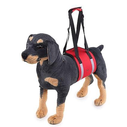 Arnés para El Arnés De Elevación para Perros, Ayuda para Caninos ...