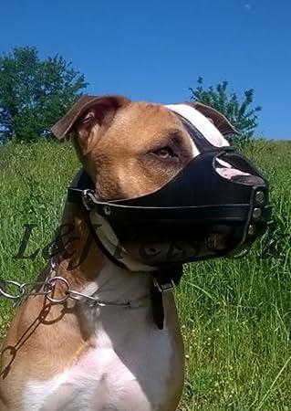 Nueva luz piel perro Bozal Amstaff y otras similares Hocico ...