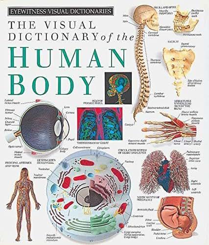 Eyewitness Visual Dictionaries: The Visual Dictionary of the Human Body (DK Visual Dictionaries)