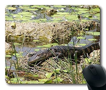 Alfombrilla de ratón con grandes Crocodilian Alligator en parque ...