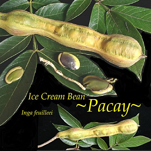 ice cream bean - 8